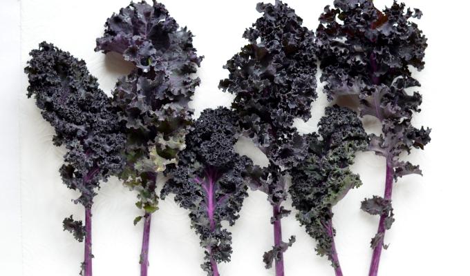 THE FOOD SERIES:Kale