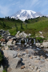 Paradise in Mount Rainier