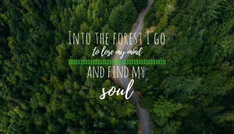 intotheforest