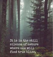 StillSilenceOfNature